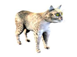 CAT_CLCO.JPG