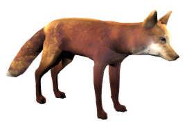 RED_FOX.JPG