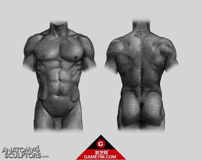 m_347867_anatomy.jpg