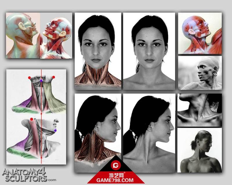 m_338844_anatomy.jpg