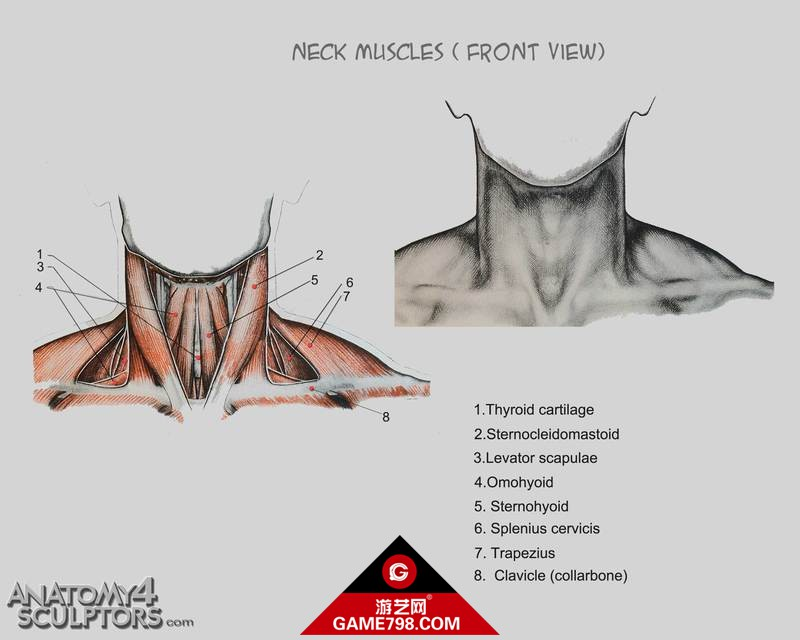 m_375137_anatomy.jpg