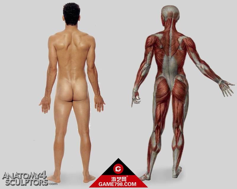 m_437749_anatomy.jpg