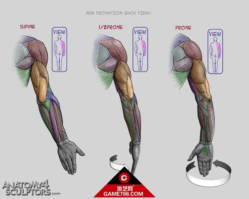 m_438912_anatomy.jpg