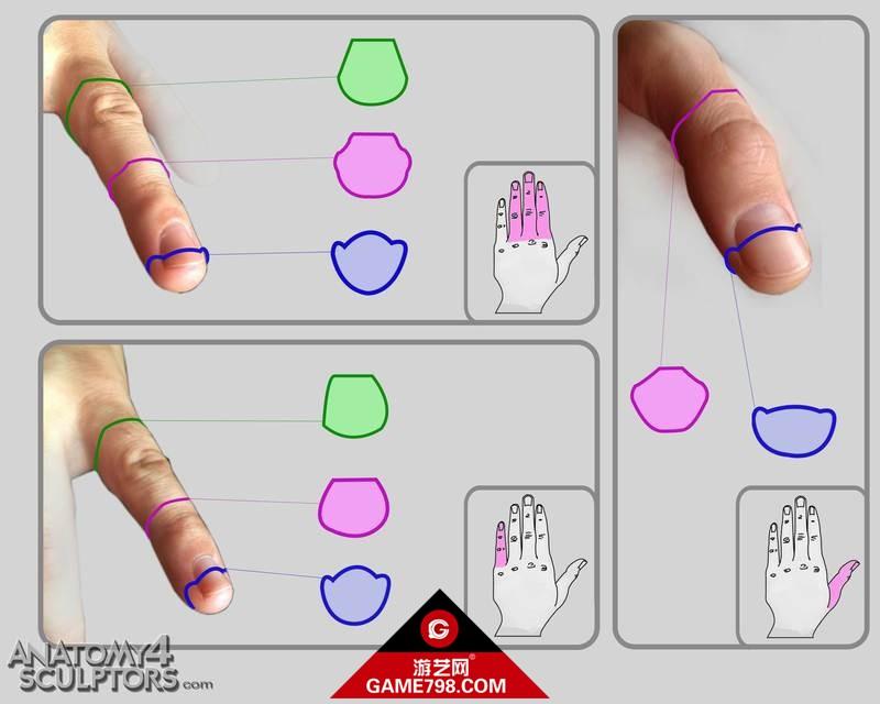 m_522127_anatomy.jpg