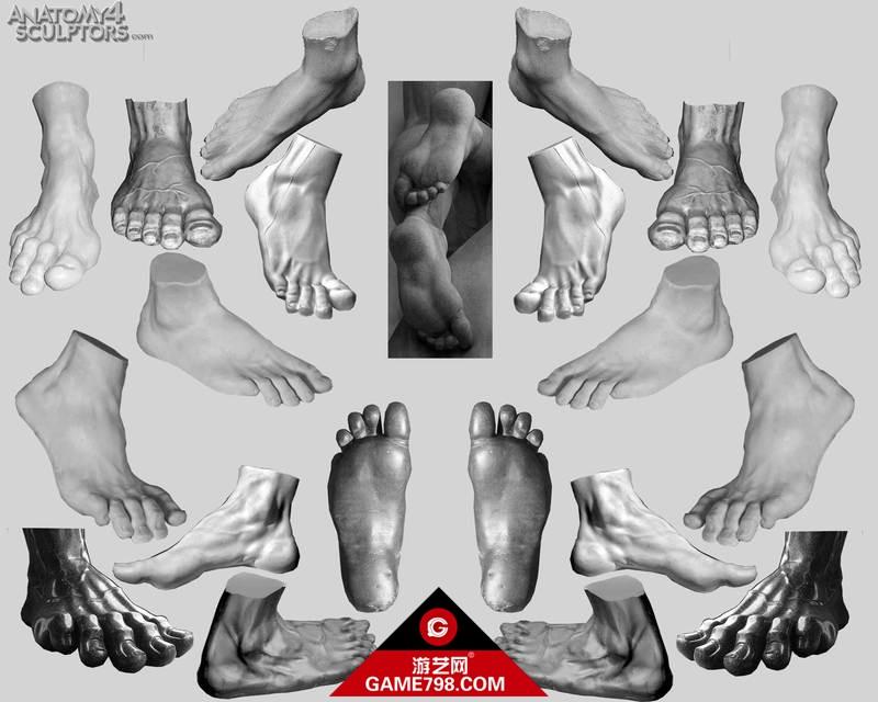 m_540853_anatomy.jpg