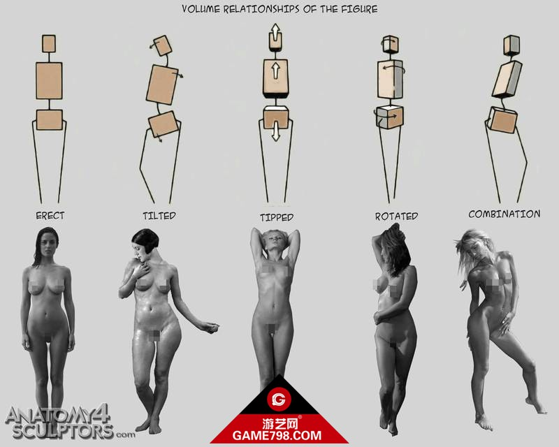 m_691358_anatomy.jpg