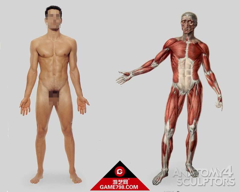 m_1024300_anatomy.jpg