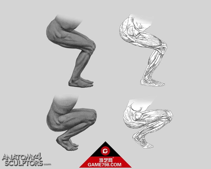 m_1078399_anatomy.jpg
