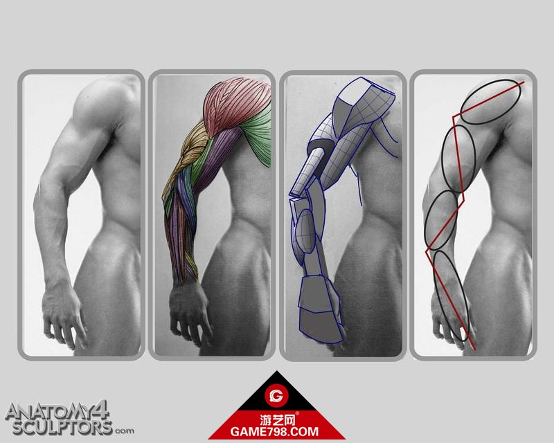 m_1553337_anatomy.jpg