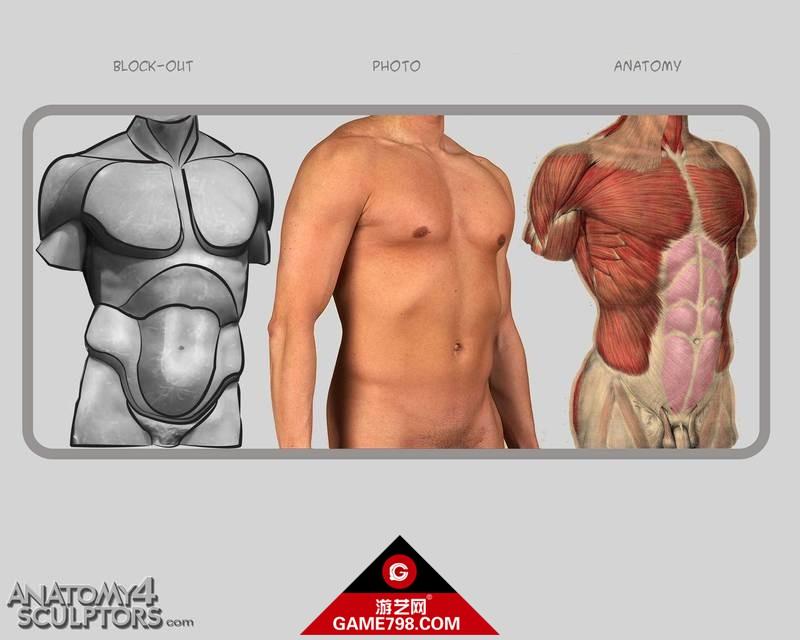 m_1600300_anatomy.jpg