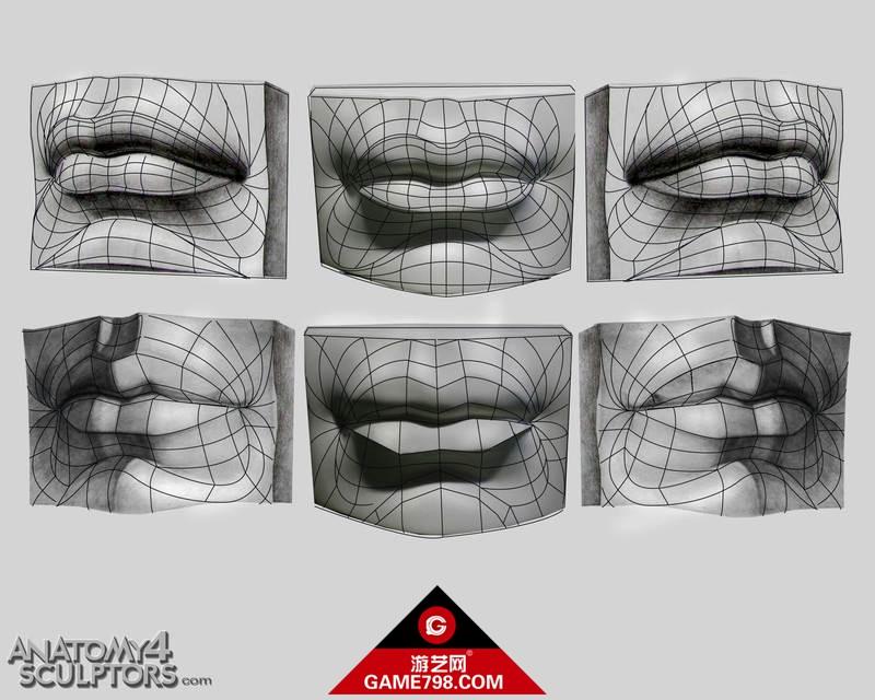 m_1820386_anatomy.jpg